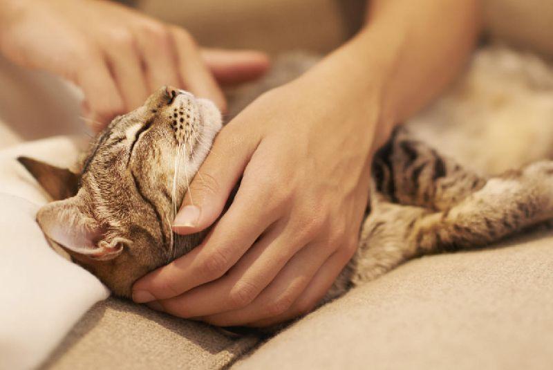 Adoption Katze
