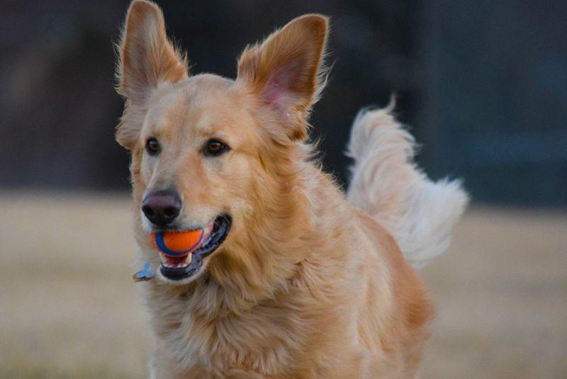 Adoption Hund