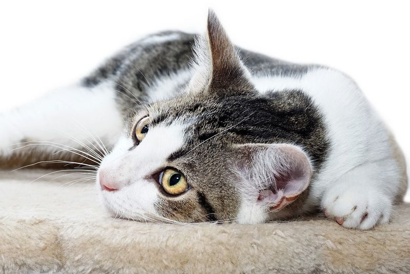 Abgabe Katze